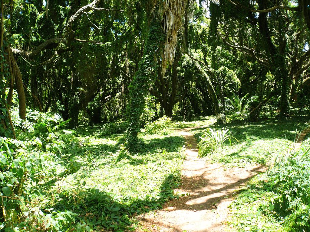 Honolua Jungle by mikebelgard@sbcglobal.net, on Flickr