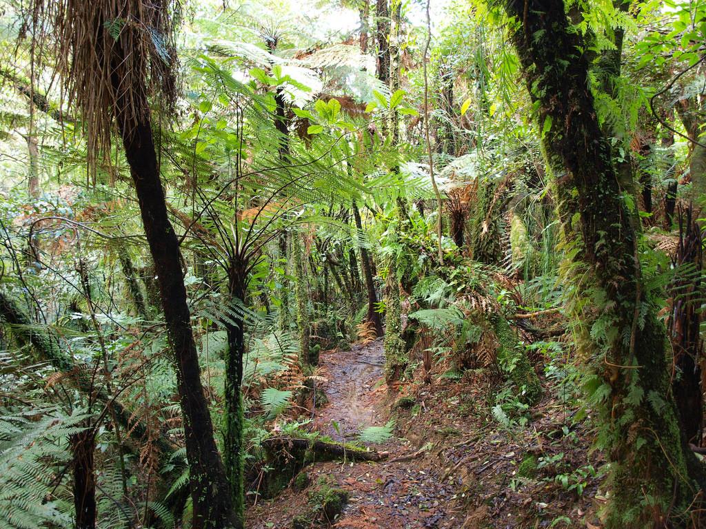New Zealand Native Bush by virginsuicide photography, on Flickr