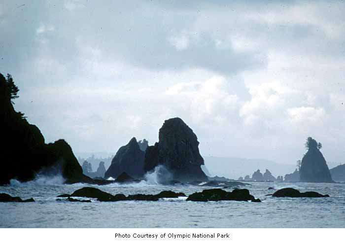 Giants Graveyard, Olympic National Park, by IMLS DCC, on Flickr