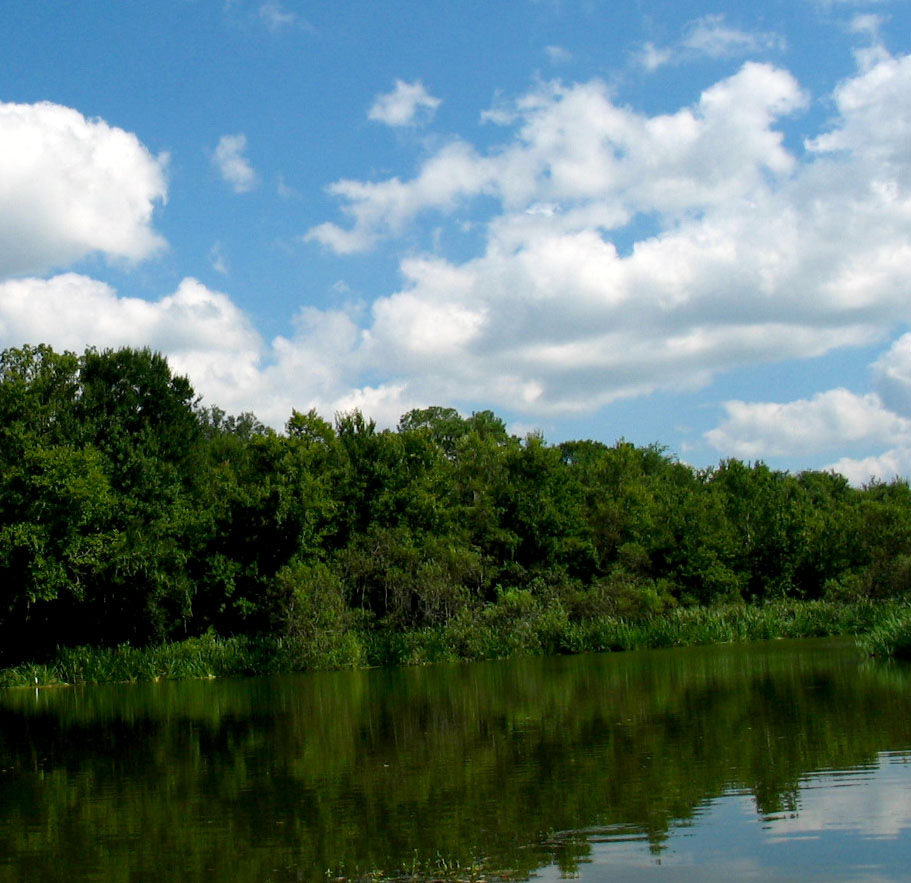 UF Lake Alice Trees Treeline Water Blue by cdsessums, on Flickr