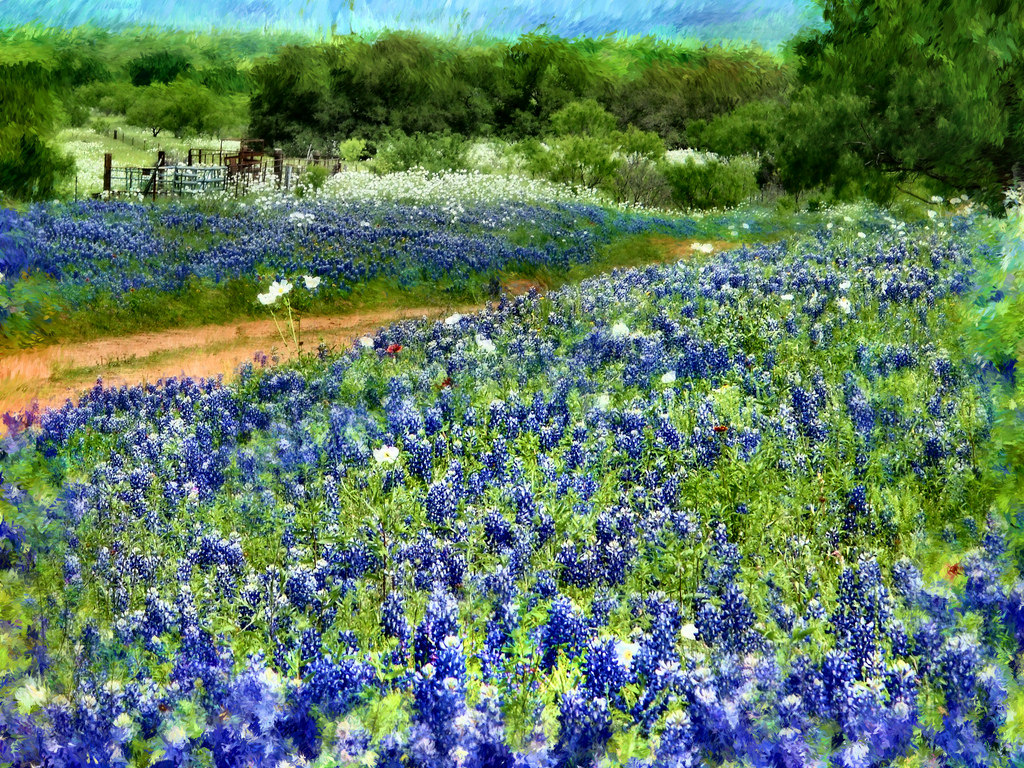 HILL COUNTRY BLUEBONNETS ... by mrbill78636, on Flickr