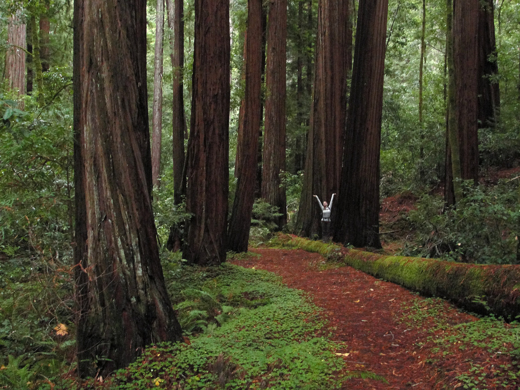 Elizabeth on Big Basin Redwoods State Pa by MiguelVieira, on Flickr
