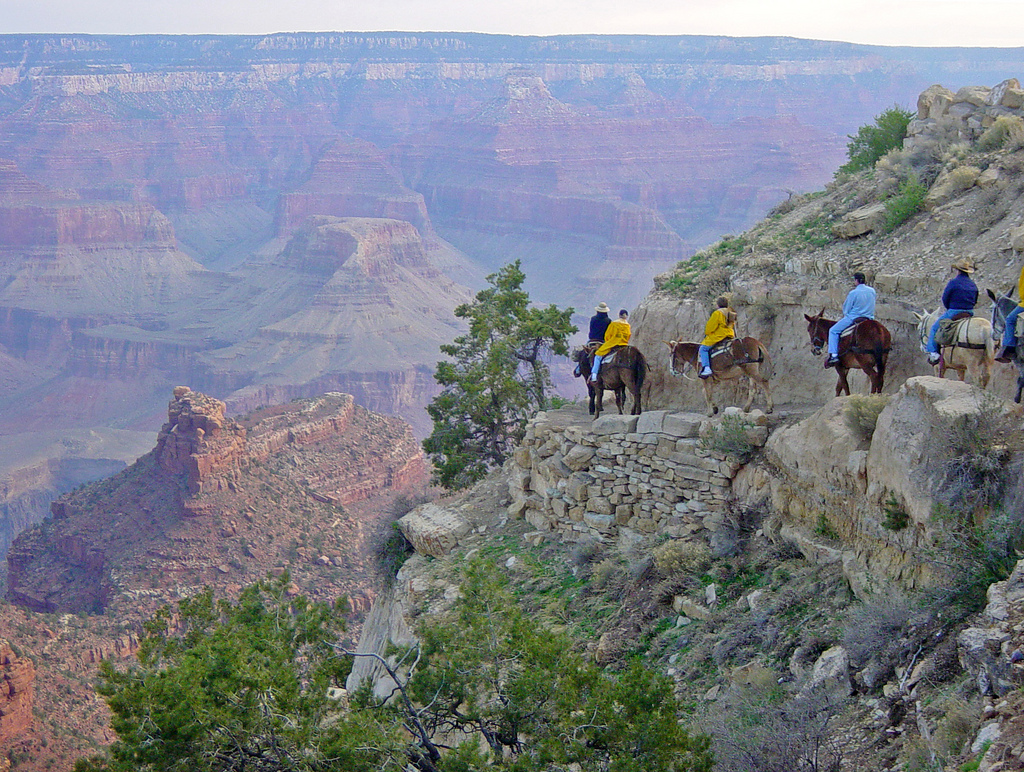 NPS Approves Stock Use Plan for Grand Ca by Grand Canyon NPS, on Flickr