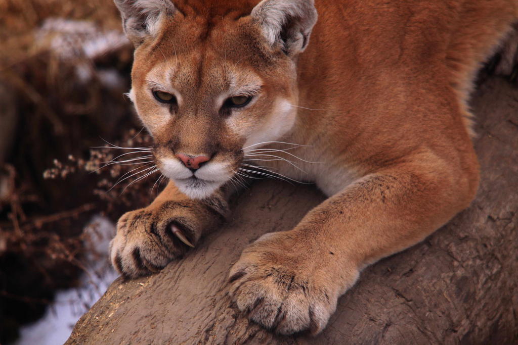 Sharpening the claws by NaturesFan, on Flickr