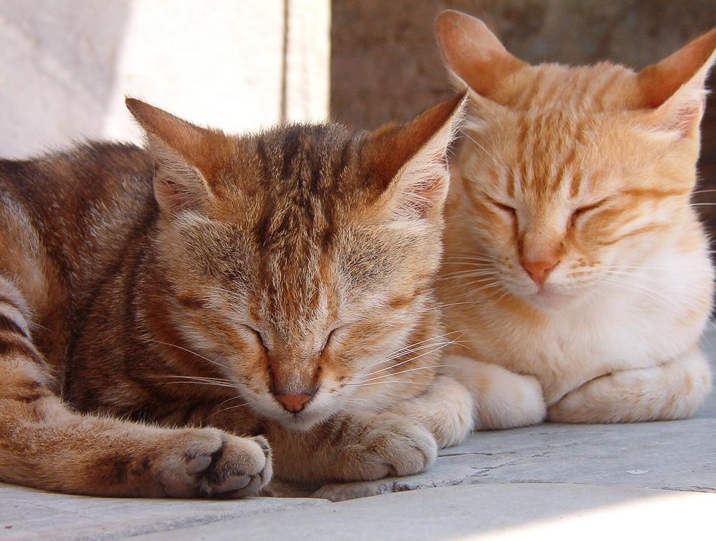 Sleepy cats by Jo@net, on Flickr