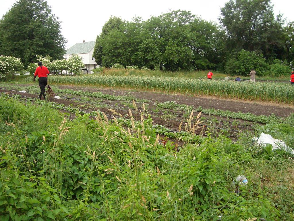 Earthworks Urban Farm by healthiermi, on Flickr