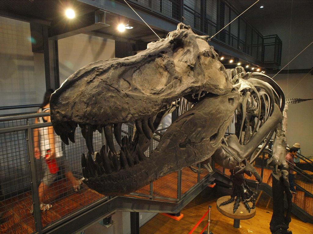 福井県立恐竜博物館 ティラ� by fukuroneko, on Flickr