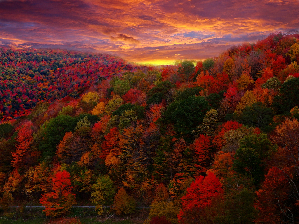 Fall Foliage Photography by ForestWander.com, on Flickr