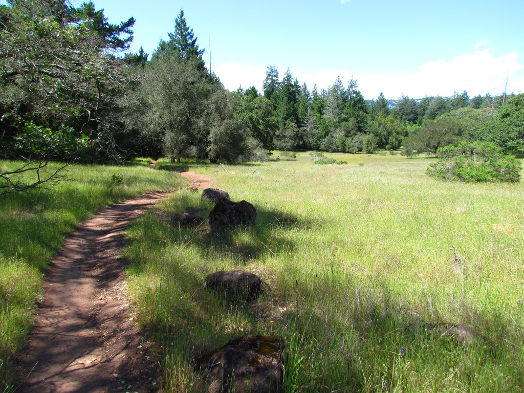Meadow on North Burma Trail, Annadel Sta by DBerry2006, on Flickr
