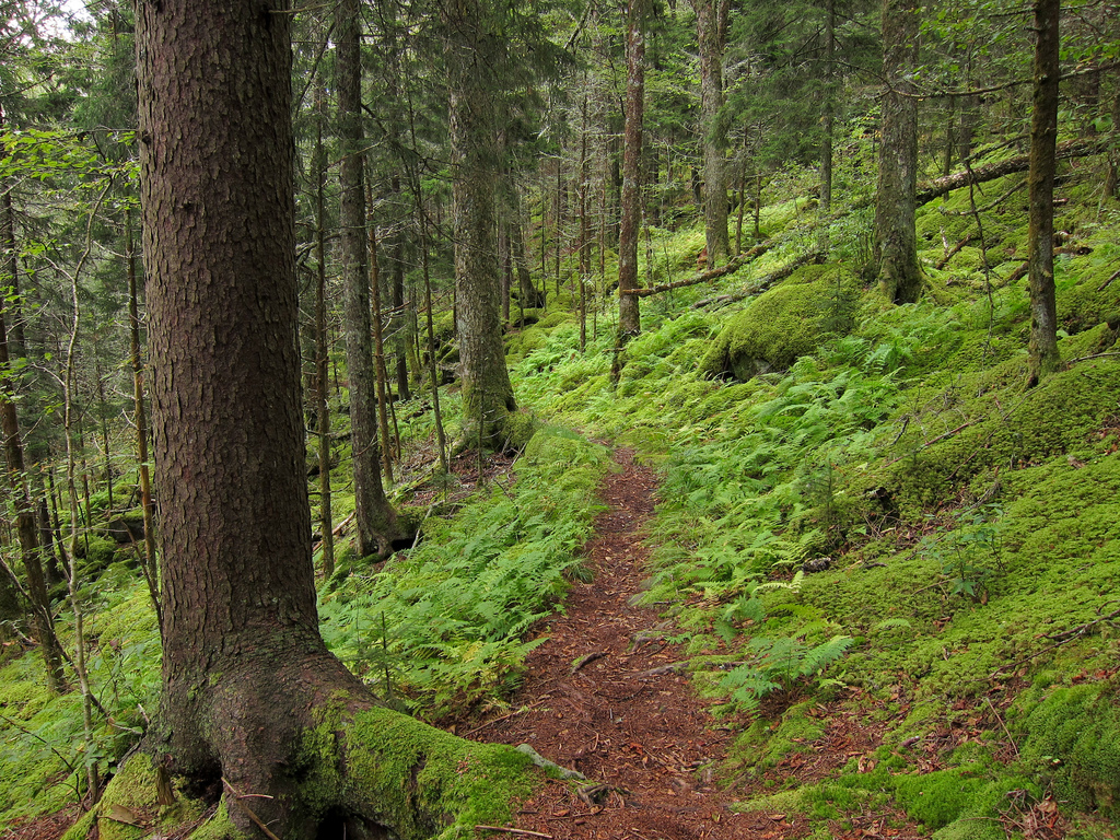 Forest on Baxter Creek Trail in Great Sm by MiguelVieira, on Flickr