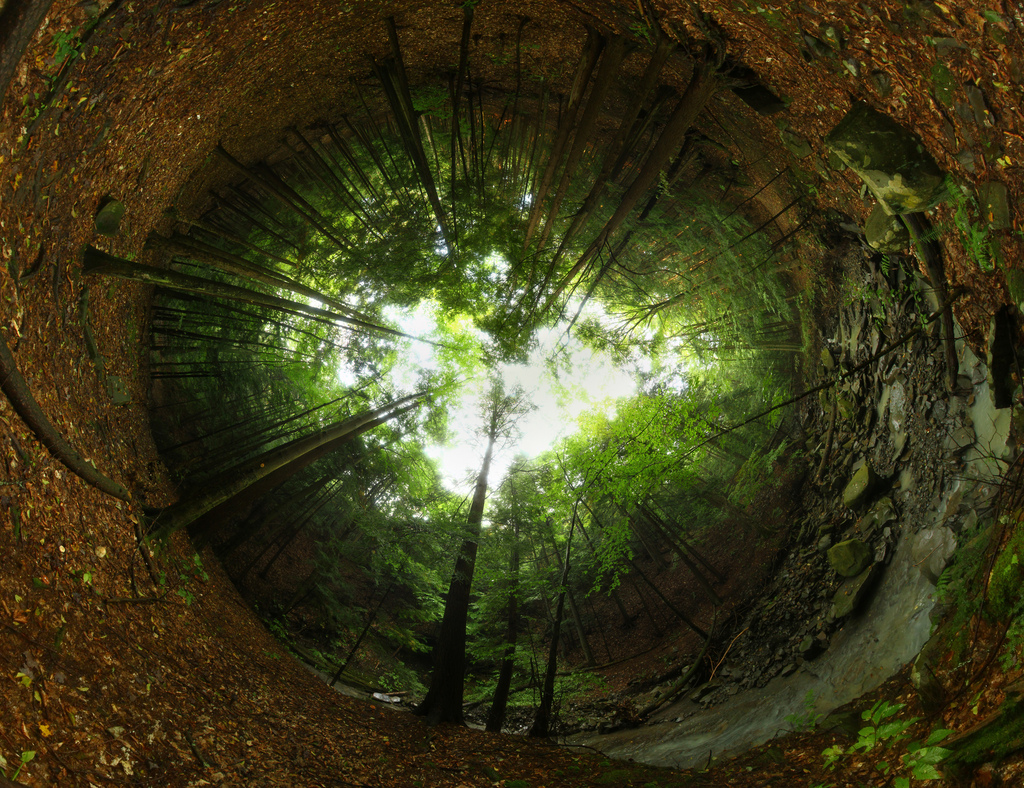 Forest Portal by waitscm, on Flickr
