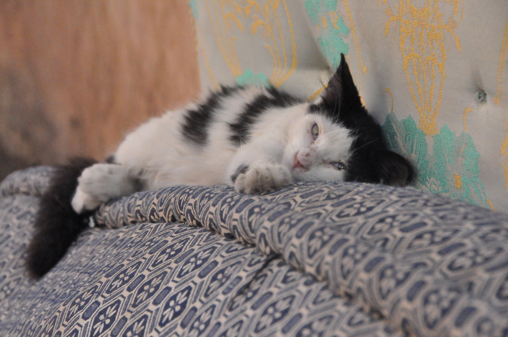 sleeping cat in Marrakech by dmums, on Flickr