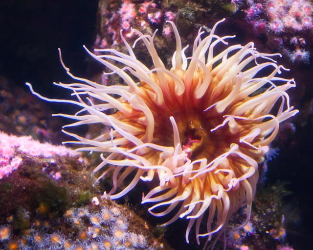 Sea Anemone by sandyhd, on Flickr