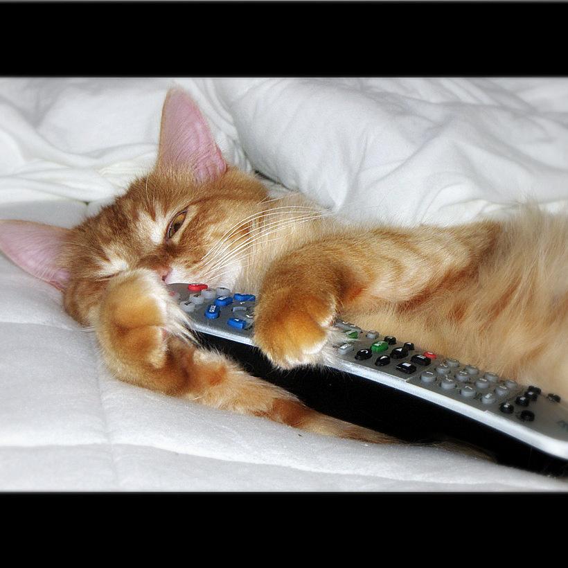 uhhhh ? what ? Noooo , NOT sleeping , wa by Trish Hamme, on Flickr