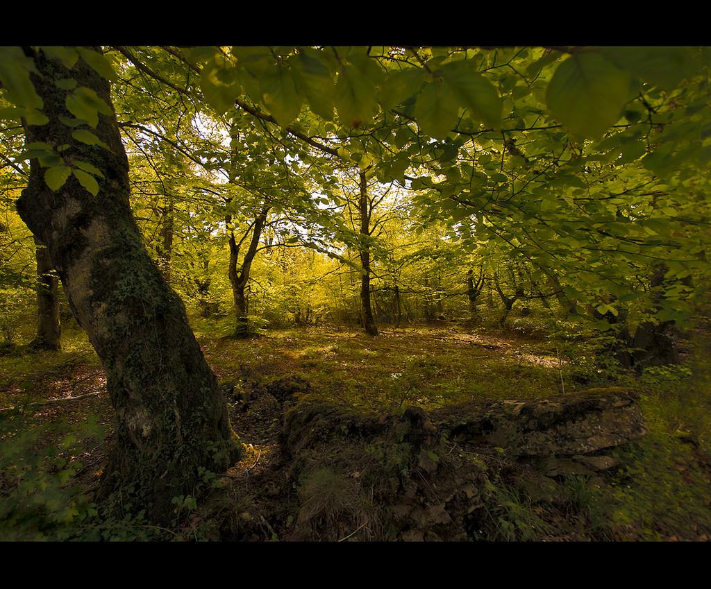 Claro en el Bosque by emubla, on Flickr