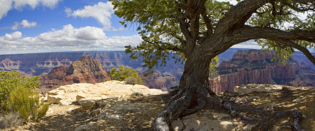 Grand Canyon National Park: Cape Royal P by Grand Canyon NPS, on Flickr