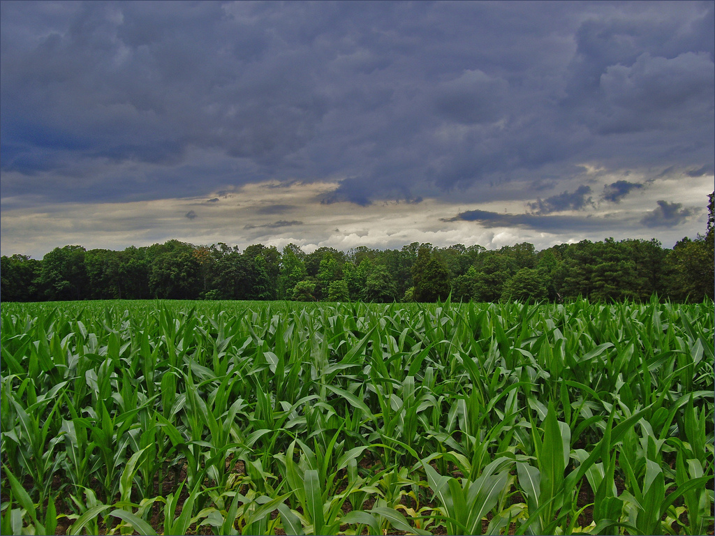 Storm Clouds over the Adams Farm -- Cold by Ron Cogswell, on Flickr