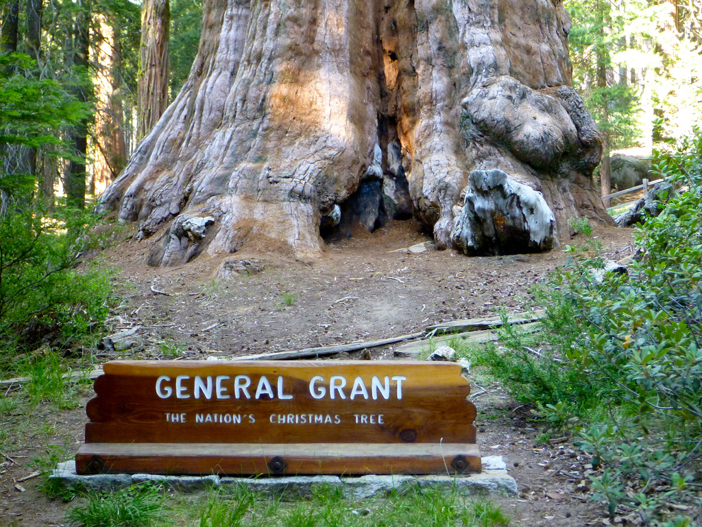 General Grant, second largest tree in th by Rick McCharles, on Flickr