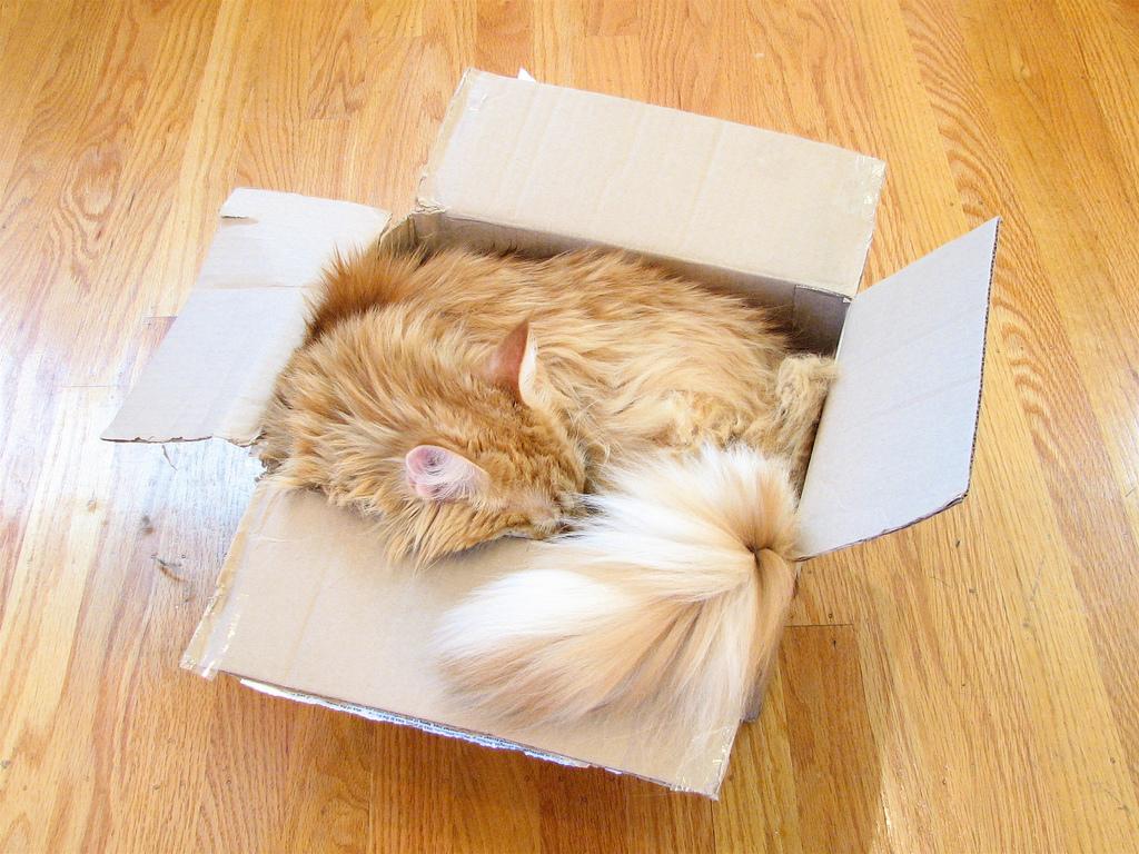 Cat volume computation by oskay, on Flickr
