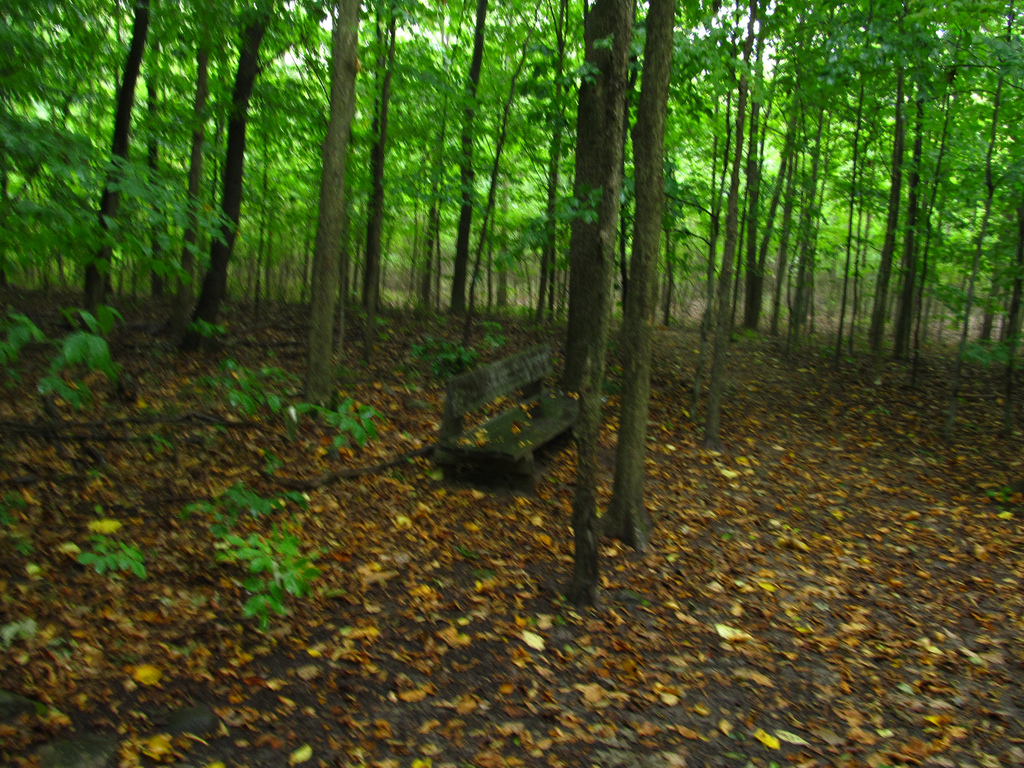 Sacred Grove, Smith Family Farm, Manches by Ken Lund, on Flickr