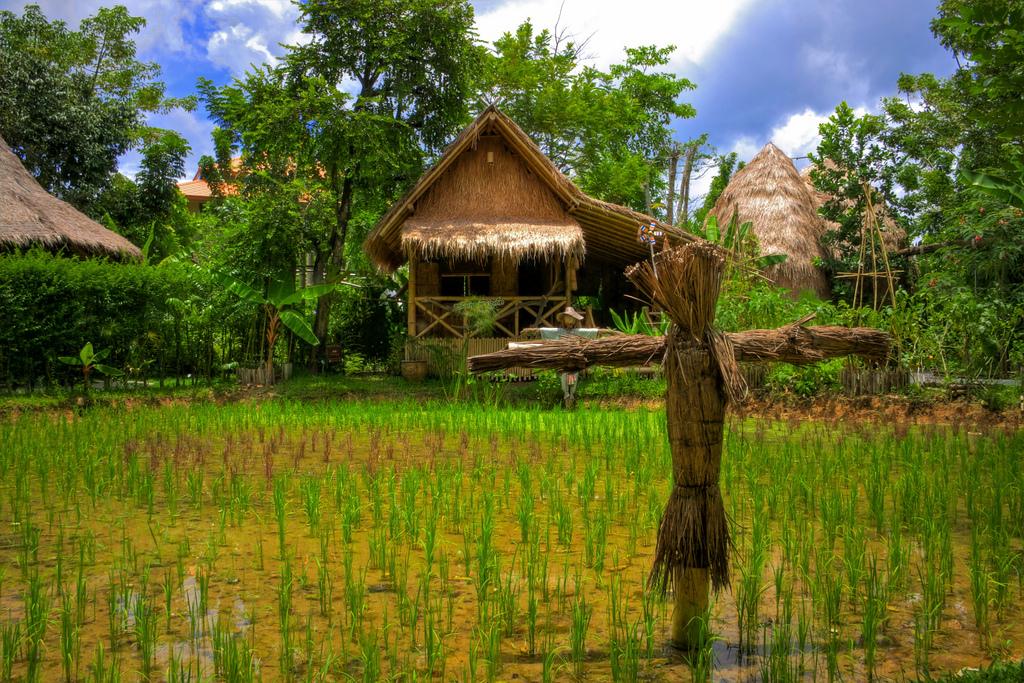 Rice Farm - تصوير عبدالعزي� by Aziz J.Hayat عبدالعزيز جوهر حيات, on Flickr