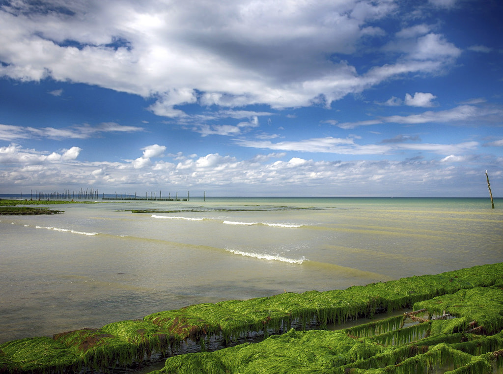 Oyster Farm On Utah Beach by A Guy Taking Pictures, on Flickr