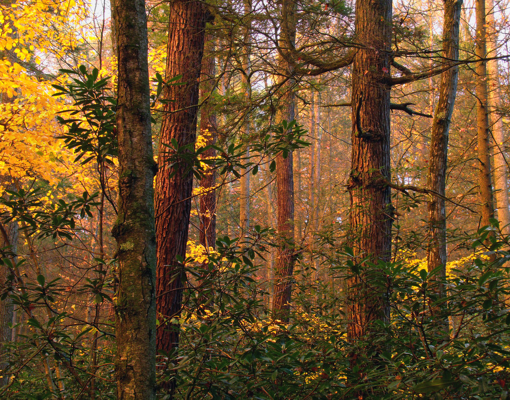 Alan Seeger Natural Area (2) by Nicholas_T, on Flickr