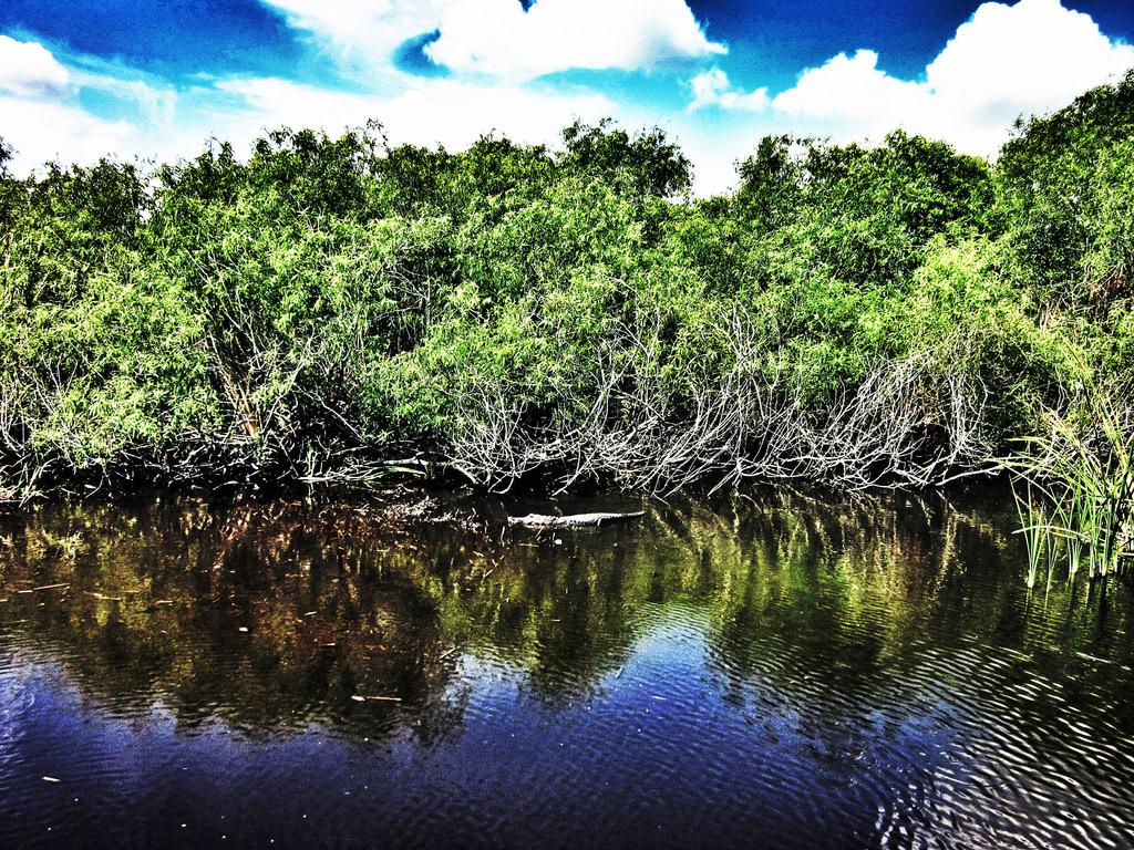 Florida Everglades by iakoubtchik, on Flickr