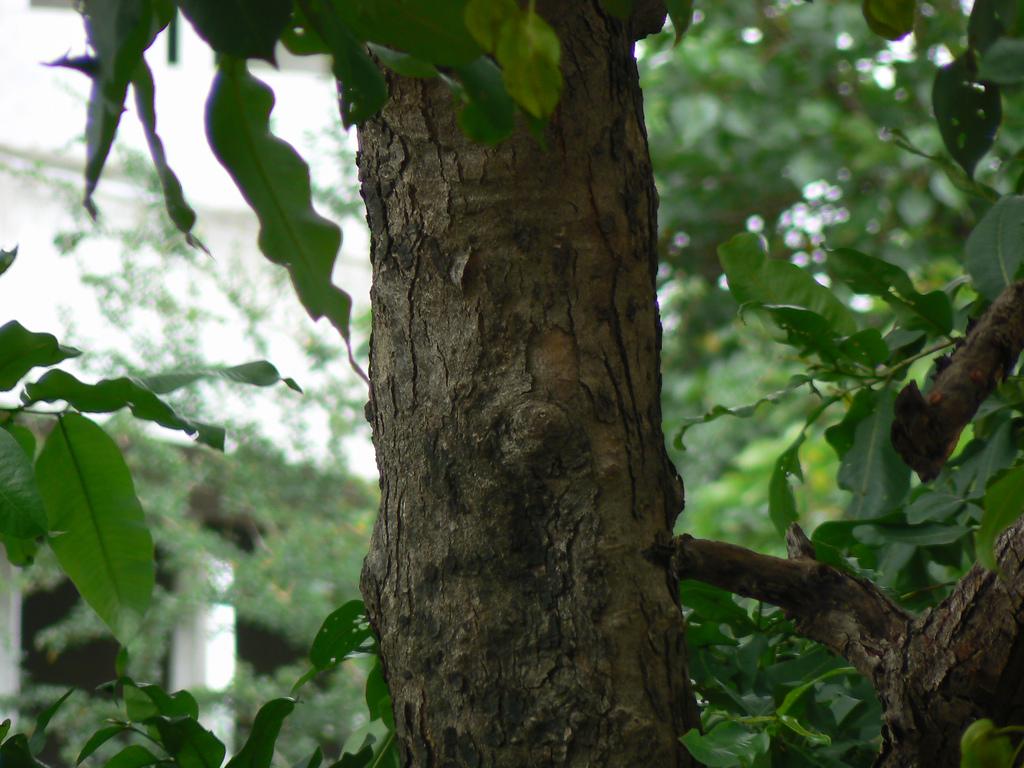 Crocodile Bark tree by dinesh_valke, on Flickr