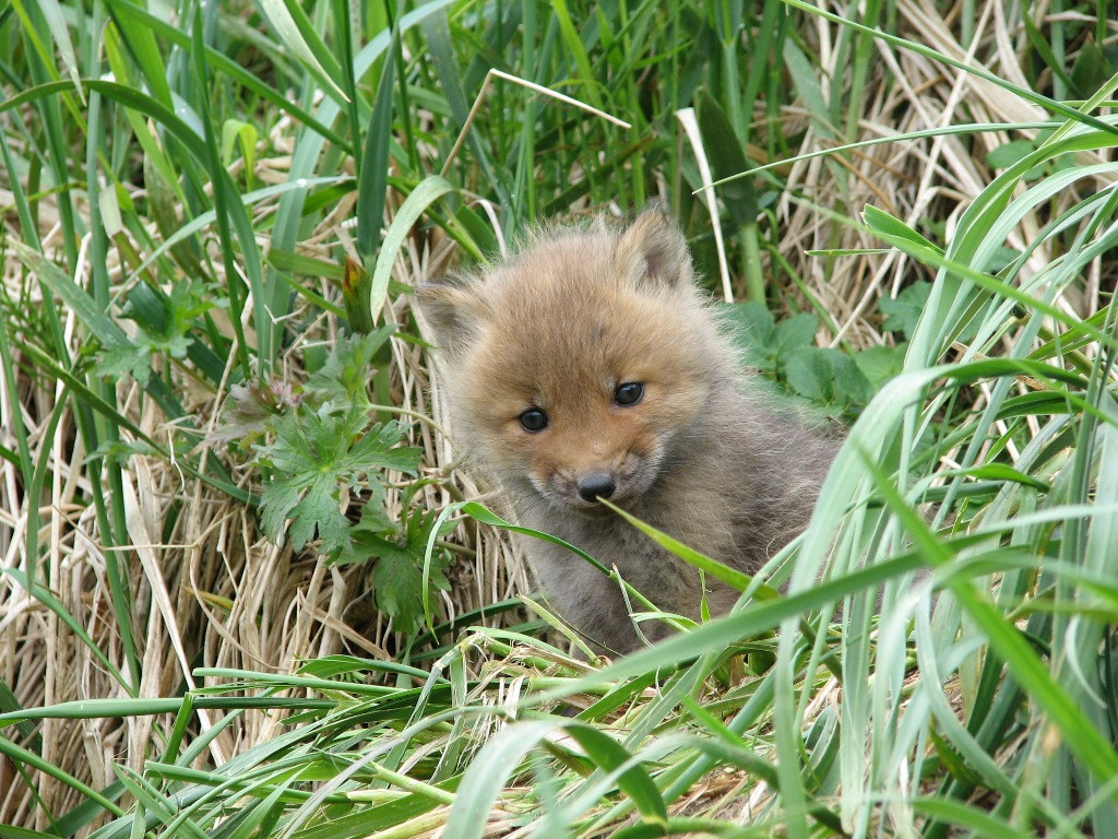 Curious Wildlife in Togiak National Wild by U.S. Department of the Interior, on Flickr