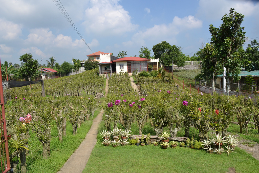 Tagaytay- orchid farm by shankar s., on Flickr