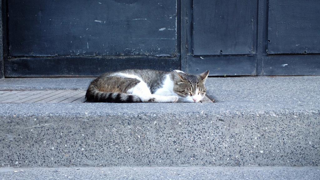 Sleeping cat by Stanislav Trifonov, on Flickr