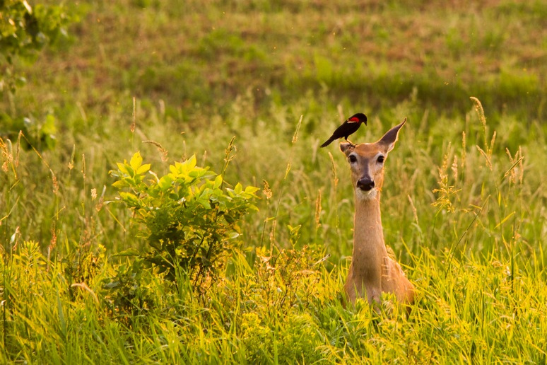 Helpful Friends by U.S. Fish and Wildlife Service - Midwest Region, on Flickr