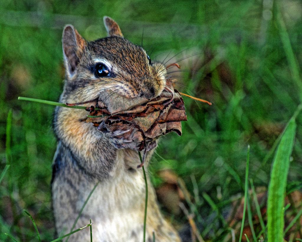 Seney National Wildlife Refuge - Wildlif by Friends of Seney National Wildlife Refuge, on Flickr