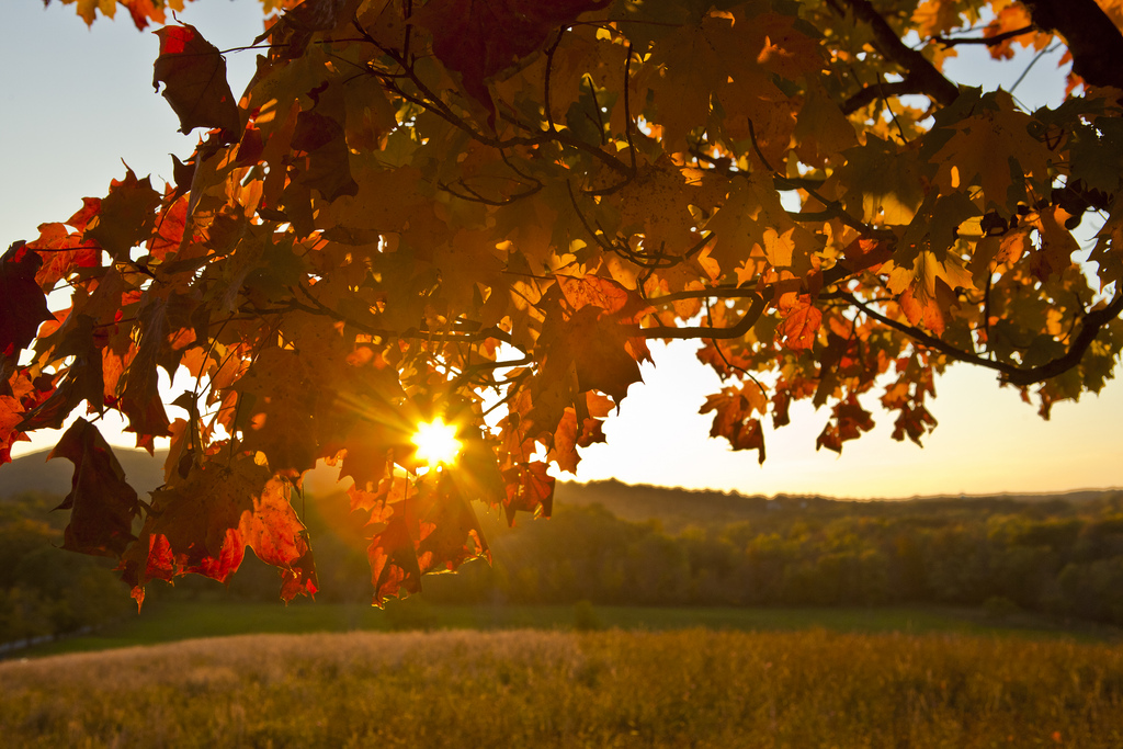 Sunset through the fall foliage in Cornw by Anthony Quintano, on Flickr