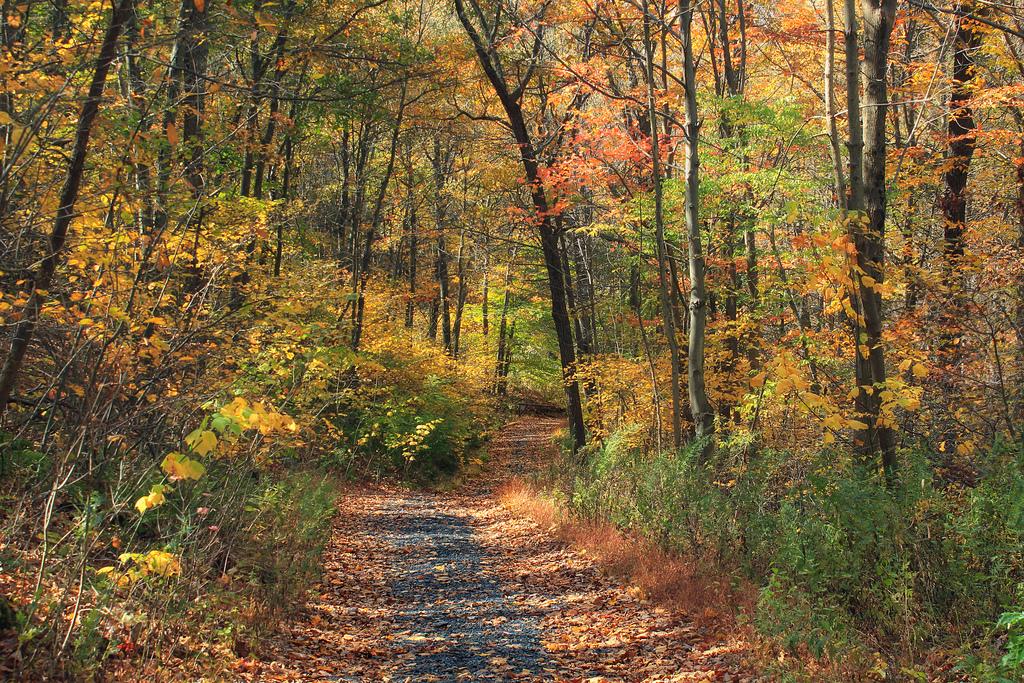 Appalachian Trail: Totts Gap to Mount Mi by Nicholas_T, on Flickr
