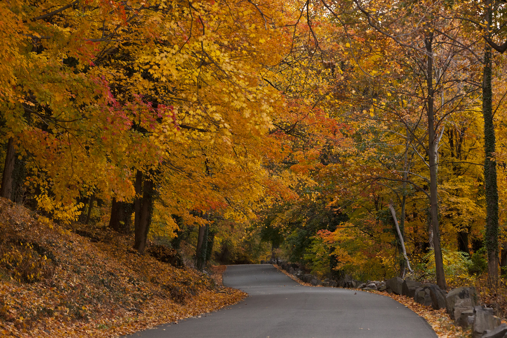 Fall foliage in Palisades Interstate Par by Anthony Quintano, on Flickr
