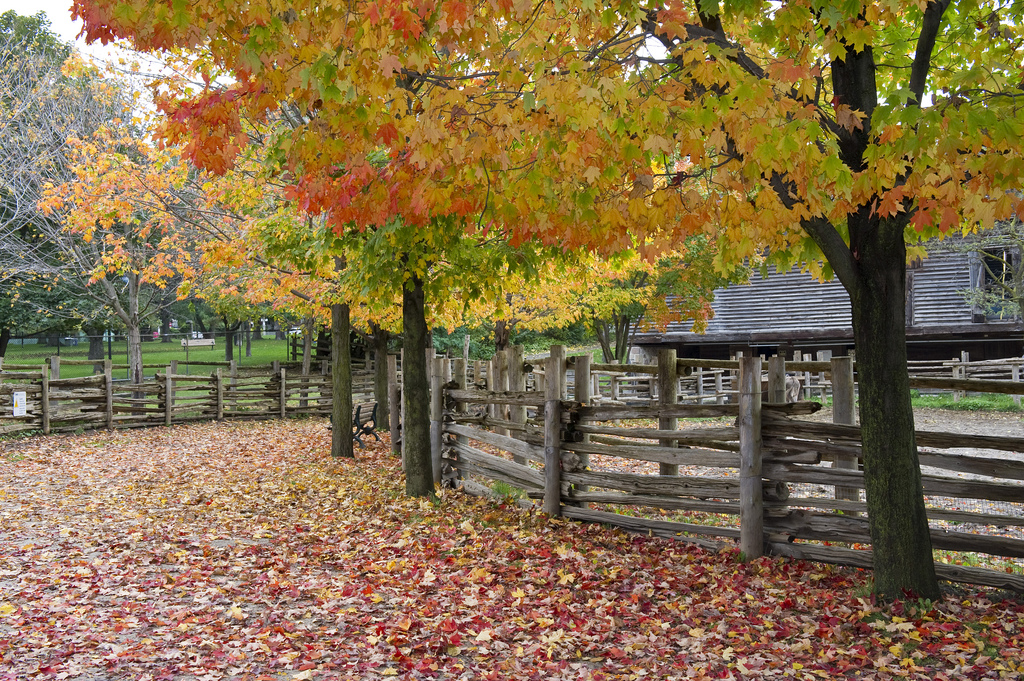 Toronto: Riverdale Farm by The City of Toronto, on Flickr