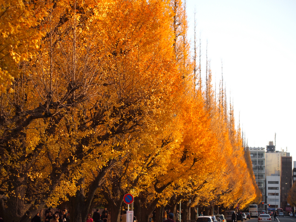 fall foliage at Icho Namiki Dori by nakashi, on Flickr