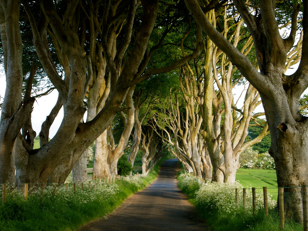 Dark Hedges by Lindy Buckley, on Flickr