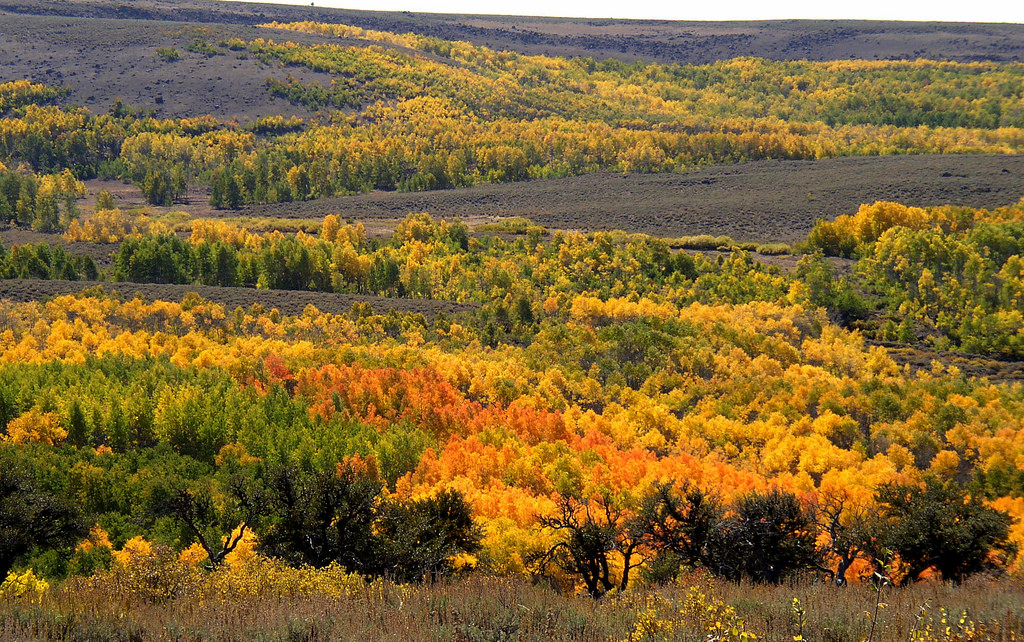 Fall Foliage Steens Mountain by BLMOregon, on Flickr