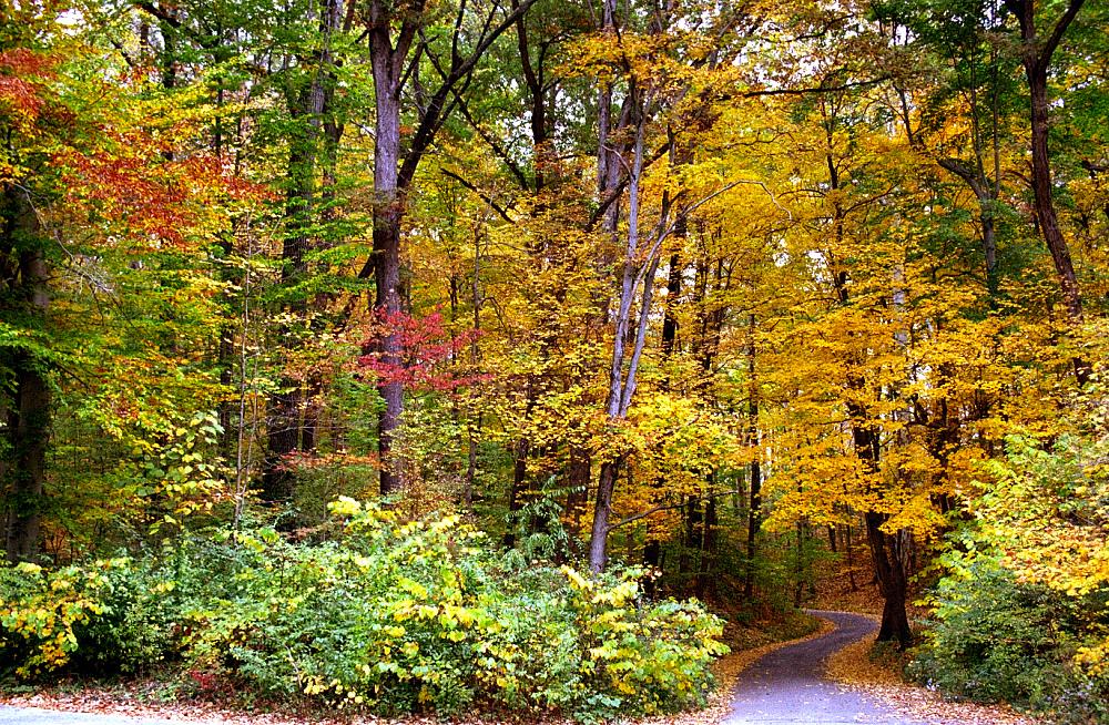 Cincinnati – Spring Grove Cemetery & A by David Paul Ohmer, on Flickr