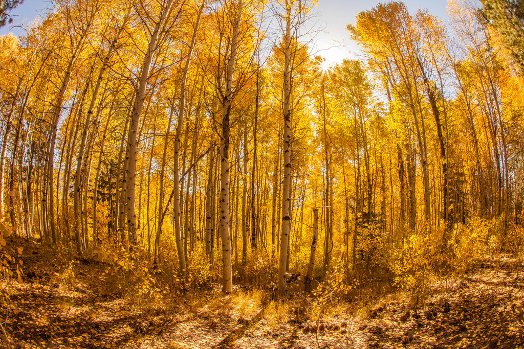 Fall Foliage in Eastern California (2014 by Anthony Quintano, on Flickr