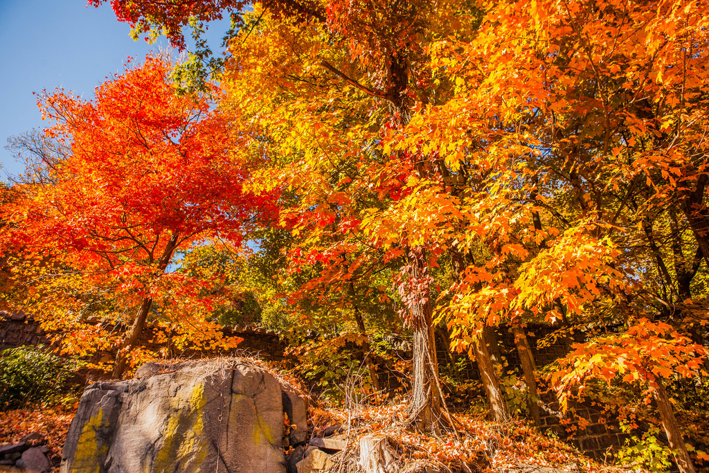 Fall foliage in northern New Jersey 2015 by Anthony Quintano, on Flickr