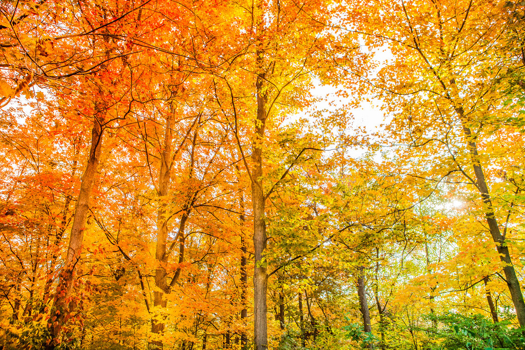 Fall foliage in Millstone, New Jersey 20 by Anthony Quintano, on Flickr