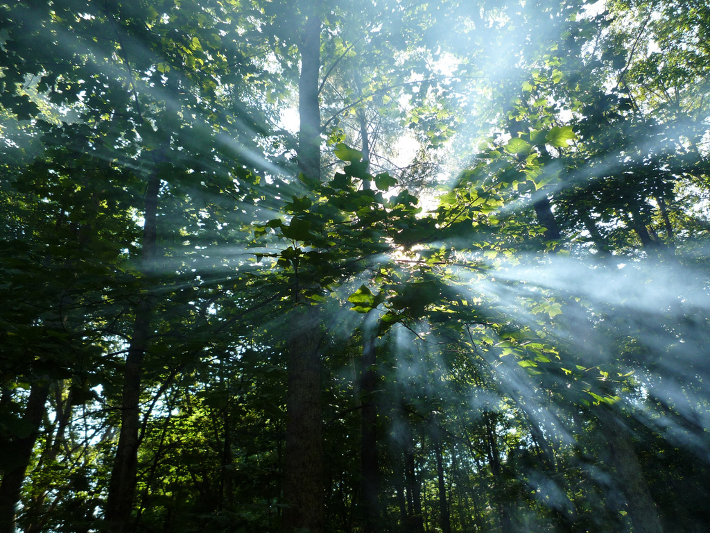 Rays Of Sun Through Smoke In The Trees by JefferyTurner, on Flickr