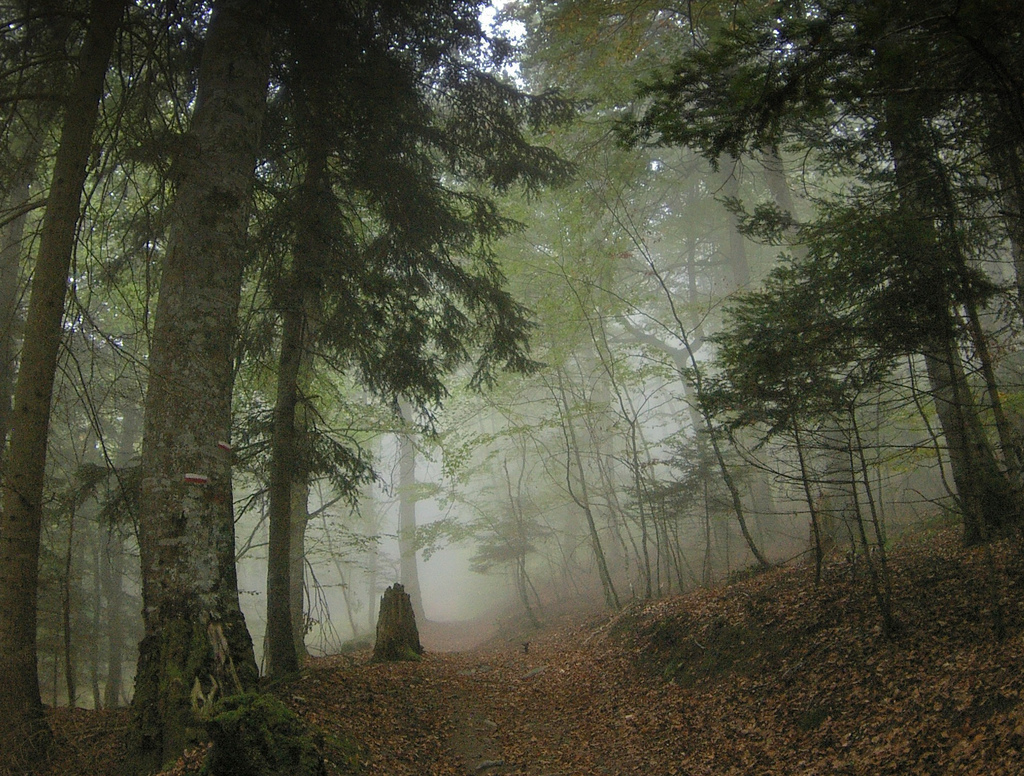 Fog in a Pyrenean Forest by AlphaTangoBravo / Adam Baker, on Flickr