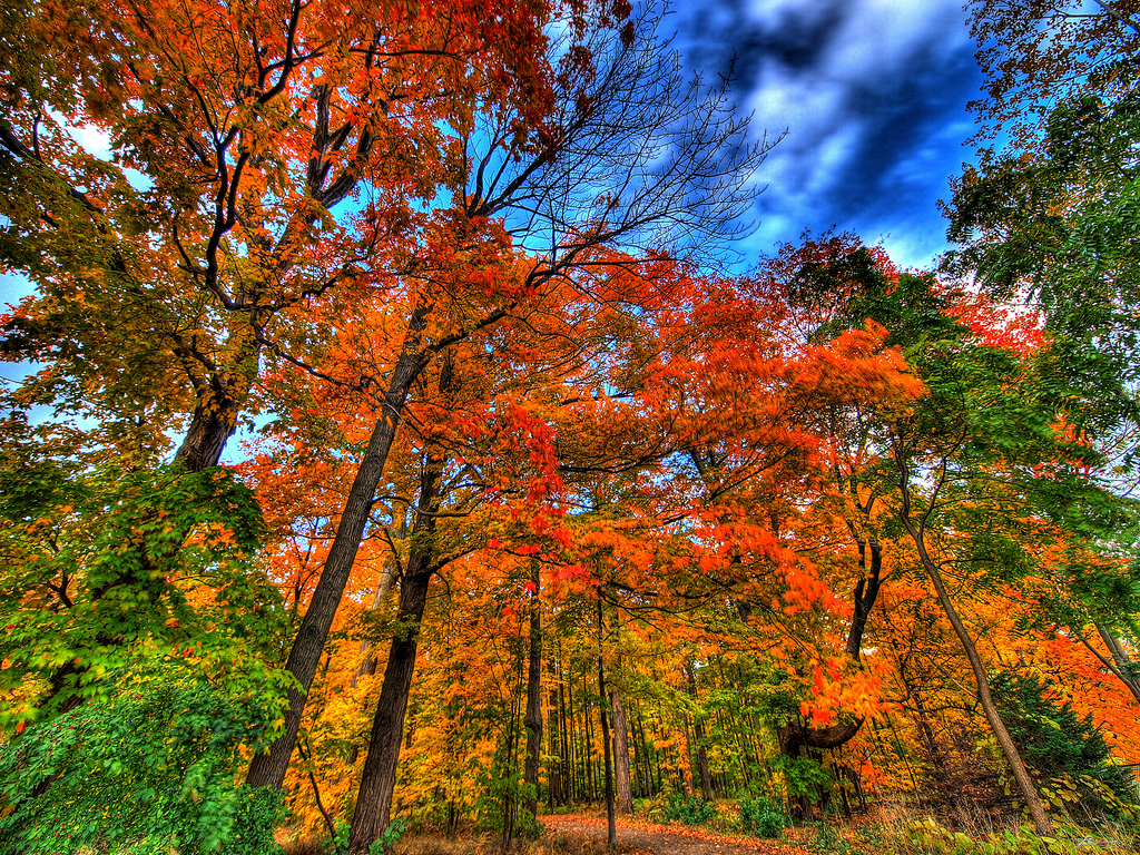 autumn falls... by paul bica, on Flickr