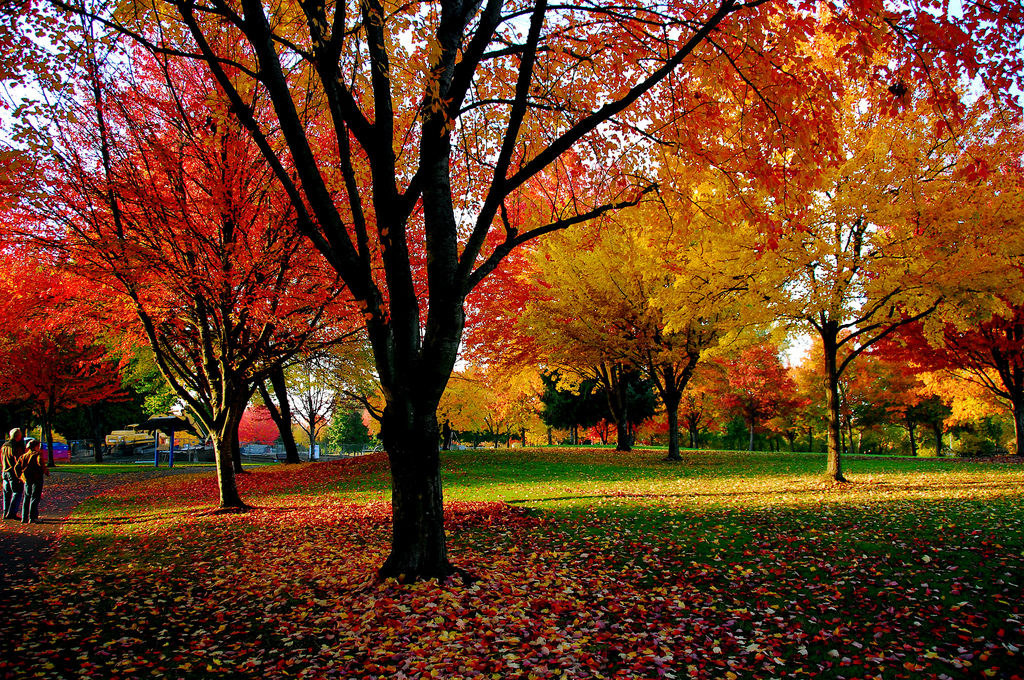 Fall Colors Of Eugene Parks by Don Hankins, on Flickr