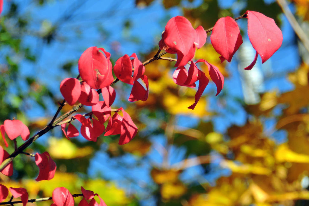 Fall foliage by runneralan2004, on Flickr